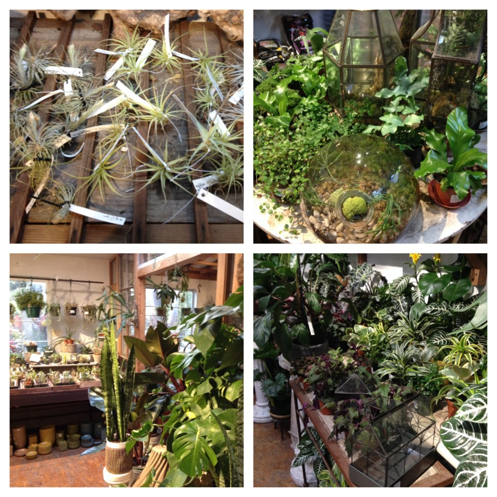 Paxton Gate terrariums and plants